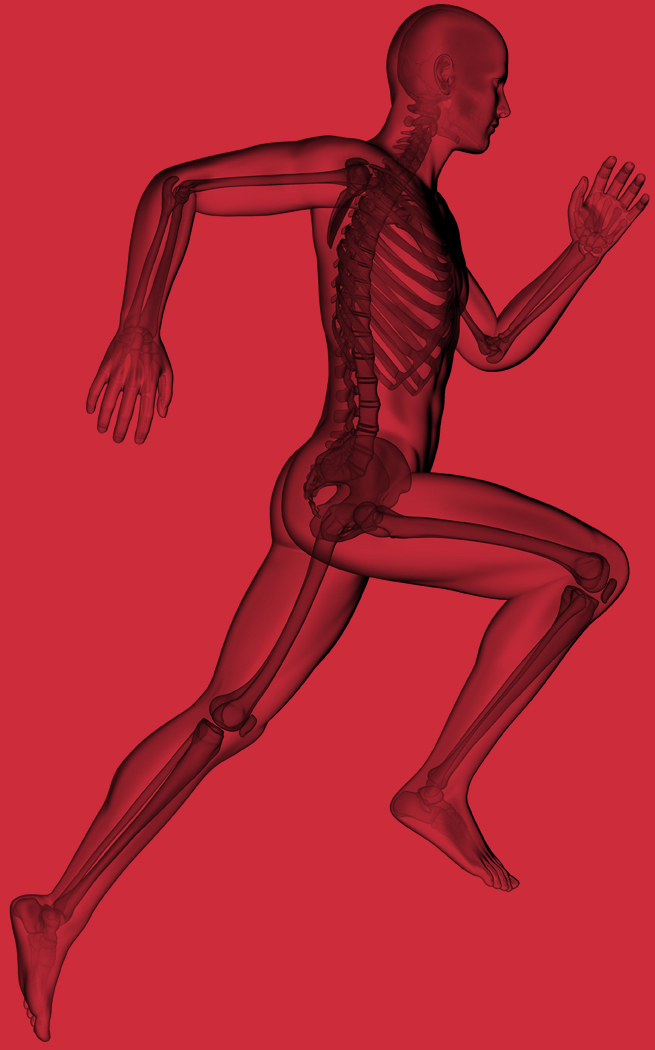 The Movement Lab Running Anatomy